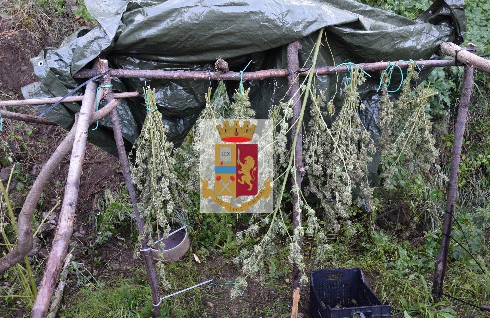 Operazione antidroga della polizia a Castellammare di Stabia (Napoli), sequestrati sette chili di canapa indiana e arrestato un 32enne