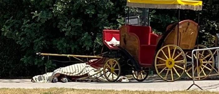"""Cavallo morto alla Reggia di Caserta, interviene il sindaco: """"Non era autorizzato al trasporto di persone"""". Revocata la licenza e sospesa l'attività delle carrozzelle"""
