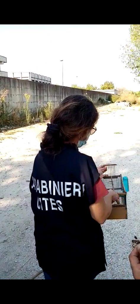 Operazione antibracconaggio dei carabinieri di Napoli, due persone arrestate per furto venatorio, sequestrati 30 animali oggetto di bracconaggio e 4 fucili da caccia